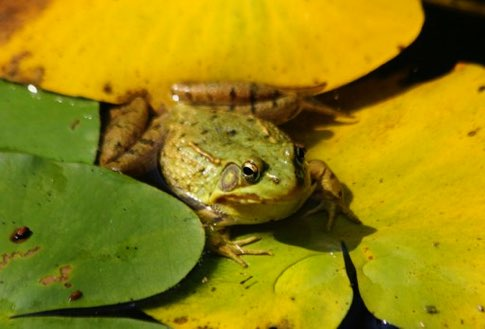 Frog Lily Pad Song Frog n Lily Pad 2